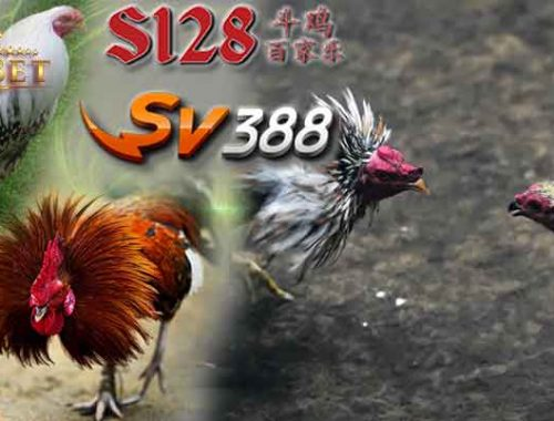 Laga Ayam S128