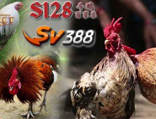 Agen S1288 Sabung Ayam