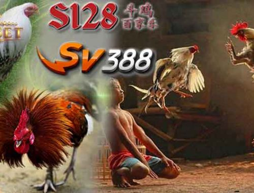 Situs S1288 Adu Ayam